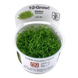 Elatine hydropiper 1-2-Grow!