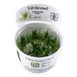 Littorella uniflora 1-2-Grow!