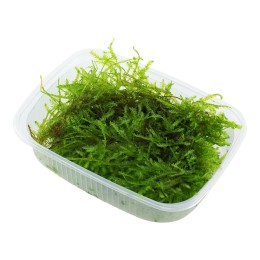 Vesicularia dubyana 'Christmas moss' - Envase porción