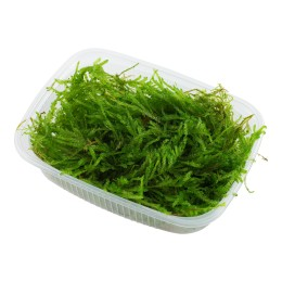 Vesicularia ferriei 'Weeping moss' - Envase porción